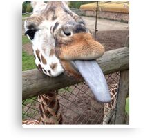 Funny Giraffe tongue - animal lovers Canvas Print