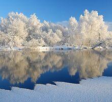 Frosty by Remo Savisaar