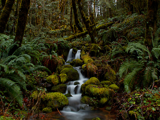 Let It Flow by Charles & Patricia   Harkins ~ Picture Oregon
