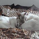 Blissful Sleep by simonescott