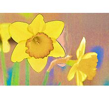 Textured Daffodils Photographic Print