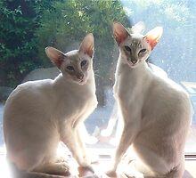 Misha et Maya by simonescott