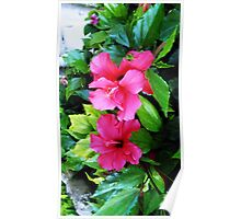 This beautiful flowers are scattered throughout gardens in all colours of the rainbow Poster