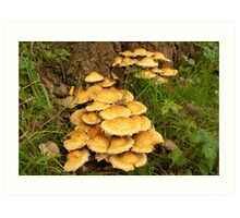 Golden mushroom village Art Print