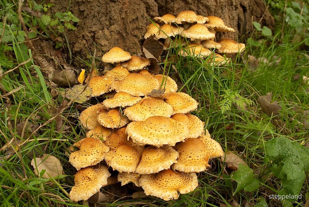 Golden mushroom village by steppeland