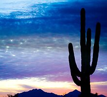 Colorful Southwest Desert Sunrise  by Bo Insogna