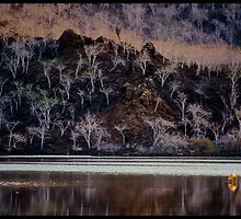 A flamingo and the white trees by Olivier Moreno