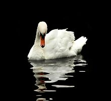 Swan Reflections by Alyson Fennell