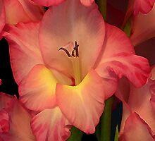 Gladiolus by Annlynn Ward