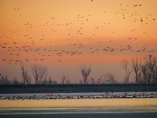 Early Winter Sunrise by Brenda Dahl