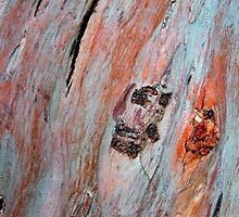 Rainbow Eucalyptus by Mandy Brown
