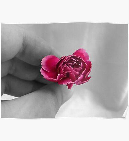 Holding Carnation Poster