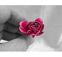 Holding Carnation Photographic Print
