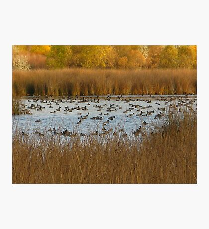 Nature's natural Beauty Photographic Print