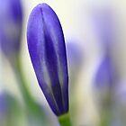 """""""Blue Bud"""" by jonxiv"""