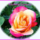 A Rose of Many Colours Birthday Card by MidnightMelody