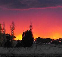 sunset dazzle by Rebekah Kilpatrick