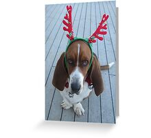 Shango Reindeer Greeting Card
