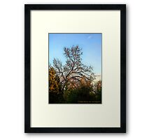 God Shed His Grace Framed Print