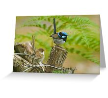 Fairy Wren at 400 ISO -low for me , upgraded? Greeting Card