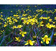 Spring at Last! Photographic Print