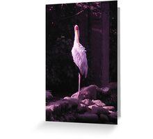 Soilder White Crane Greeting Card