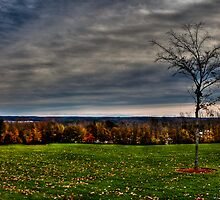 Lonely Tree above the Beautiful Fall Colors  by Papandrea Photography