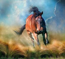 Drifter by Trudi's Images