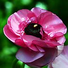 Pink Bloom by rafstardesigns