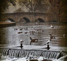 ...bridge(d)... by Russ Styles