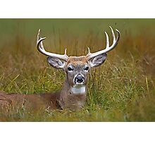 White-tailed deer Buck Photographic Print