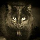 Black Cat by Rachael Taylor