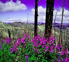Forest Fires & Wildflowers by Chad M