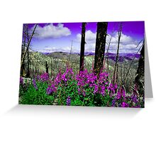 Forest Fires & Wildflowers Greeting Card