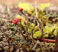 Little Lichen by vigor