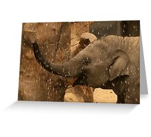 Baby elephant water fun  Greeting Card