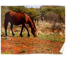 Wild Outback Horses Poster