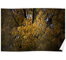Fall Yellow Poster