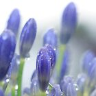 Blue Buds by Margi