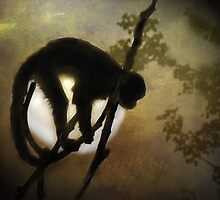 Moon Monkey by Carol Bleasdale