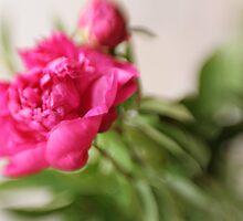Ranunculus by WestawayStreet