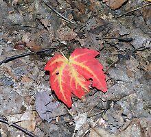 Change of Color by bradleyduncan