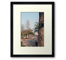 trees in beach Framed Print