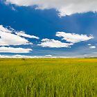 rice farm under the blue sky  by hinnamsaisuy