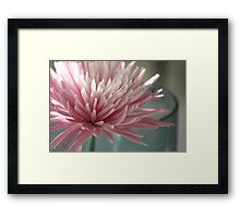 Lone bloom ..... Framed Print