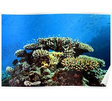 Corals and Fish Poster