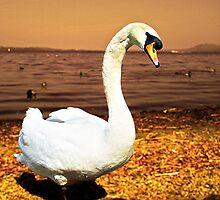 Bird of gold by Fiona Mouzakitis