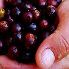 Hand of the olives by Fiona Mouzakitis