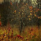 The Old Apple Tree by Charles & Patricia   Harkins ~ Picture Oregon