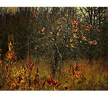 The Old Apple Tree Photographic Print